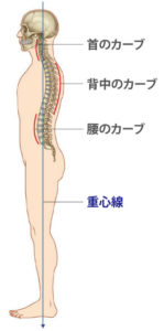 curve-of-spine
